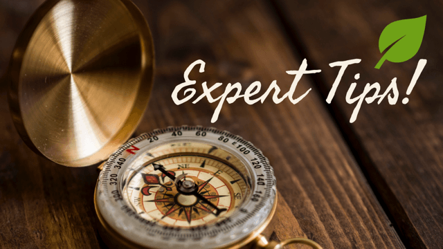 Find Undiscovered Treasures at Ancestry.com: Expert Tips
