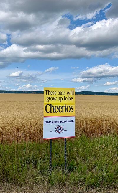 Cheerios in the farm fields
